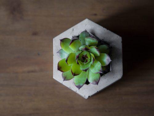 Betonový květináč na sukulenty
